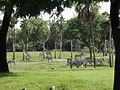 Serengeti Plain (Busch Gardens Africa).JPG