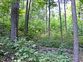 Shawnee State Park Trail.jpg