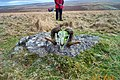 Sheep skull near Legis Tor - Dartmoor - geograph.org.uk - 120547.jpg