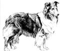 Shetland Sheepdog (PSF).png
