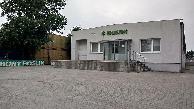 File:Shop Buena in Szamotuły.jpg