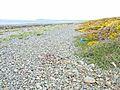 Shore of Luce Bay near Corwall Port - geograph.org.uk - 319606.jpg