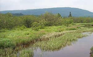 Shrub swamp - The Blackwater River passes through shrub swamp in Canaan Valley, West Virginia, US.
