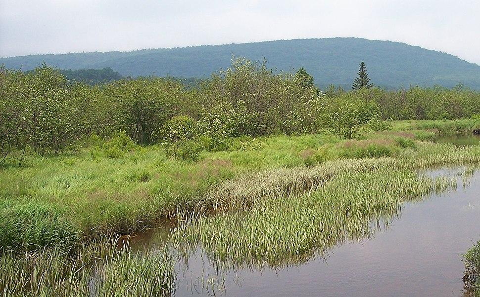Shrub swamp