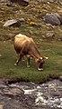Sierra Nevada juni 1999 16.jpg