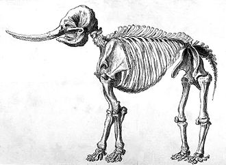 1801 in archaeology - Drawing of a mastodon skeleton by Rembrandt Peale