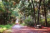 Skidaway Island State Park.jpg