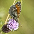 Small Heath (36981266175).jpg