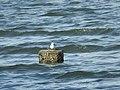 Small bird in a vast ocean.jpg