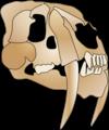 Smilodon skull.png