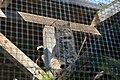 Solingen Vogelpark Wildkatze.jpg