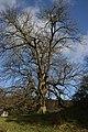 Solitary tree, Hafod Estate - geograph.org.uk - 558914.jpg