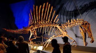 Neural spine sail - Spinosaurus, a dinosaur with a sail