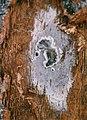 Spore Mat 1997 Close Up.jpg