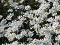 Spring in St. James Park - London (2326860643).jpg