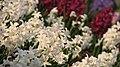 Spring in botanic garden - Cluj-Napoca (3438786825).jpg