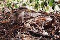 Squirrel A.jpg