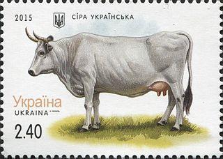 Ukrainian Grey Ukrainian breed of cattle