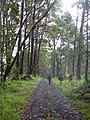 Starr-040713-0010-Eucalyptus sp-habit-Kopiliula-Maui (24418769120).jpg