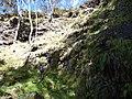 Starr-180305-0810-Pteris cretica-with Kim in gulch-Kahikinui-Maui (40341345055).jpg