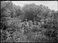 Stewart Island. Albert Percy Godber and a woman (possibly his daughter Phyllis) standing in the bush. ATLIB 273978.png