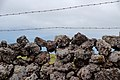 Stone wall on the access road to Mount Pico, Pico Island, Azores, Portugal (PPL1-Corrected) julesvernex2.jpg