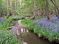 Stream through bluebell woods at Moor Corner, New Forest - geograph.org.uk - 170489.jpg