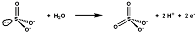 Sulfite-oxidase-reaction.png