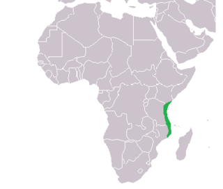 Zanj name used by medieval Muslim geographers to refer to a portion of Southeast Africa