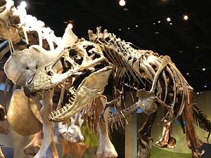 Perot Museum of Nature and Science - Cast skeleton of Tyrannosaurus rex in Life Then and Now hall