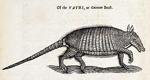 Armadillo - 1658 woodcut of an armadillo