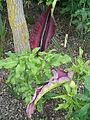 Terra Botanica - Fleur05.jpg