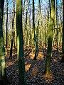 Texel - De Dennen - Beech forest - View NE.jpg