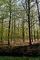 Texel - De Dennen - View SSE - Budding Beeches.jpg