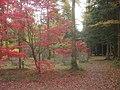 The Autumn Garden - 3 - geograph.org.uk - 1142441.jpg