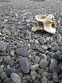 The Beach 01.jpg