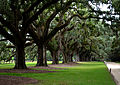 The Boone Hall Plantation- 200 year old trees 2.jpg