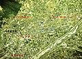 The Isawa and Kasugai Hot spring area Aerial photograph.jpg