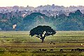 The Lonely Tree SL.jpg