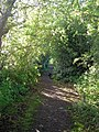 The Northriggs path, Bowden - geograph.org.uk - 1361437.jpg