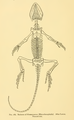 The Osteology of the Reptiles-300 uhg.png