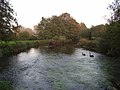 The River Kennet - geograph.org.uk - 262129.jpg