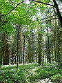 The Royal Forest of Dean 2 - geograph.org.uk - 1431845.jpg