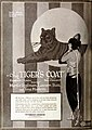 The Tiger's Coat (1920) - 2.jpg