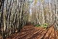 The Wealdway, Hurst Wood - geograph.org.uk - 1571641.jpg