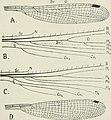 The biology of dragonflies (Odonata or Paraneuroptera) (1917) (20194221420).jpg