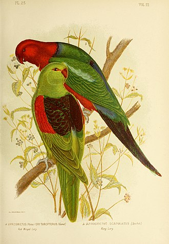 """Gracius Broinowski - Plate illustration from """"The Birds of Australia"""", Gracius Broinowski 1890."""