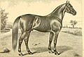 The breeds of live stock, and the principles of heredity (1887) (14594403200).jpg
