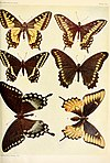 The butterfly book BHL4691718.jpg
