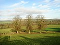 Three Trees - geograph.org.uk - 289418.jpg